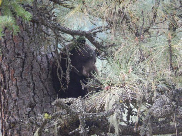 2015 CFO Tedeschi Fall Bear Hunt 007